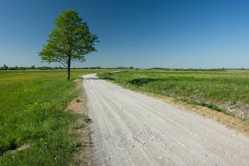 Grand arbre isolé à côté d'une route de gravier, d'un horizon et d'un ciel sans nuages bleu images libres de droits