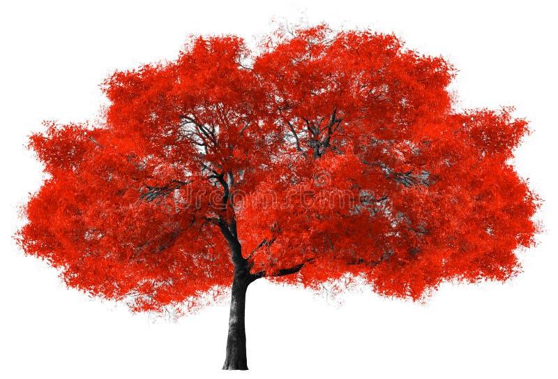 Grand arbre rouge sur le fond blanc image libre de droits