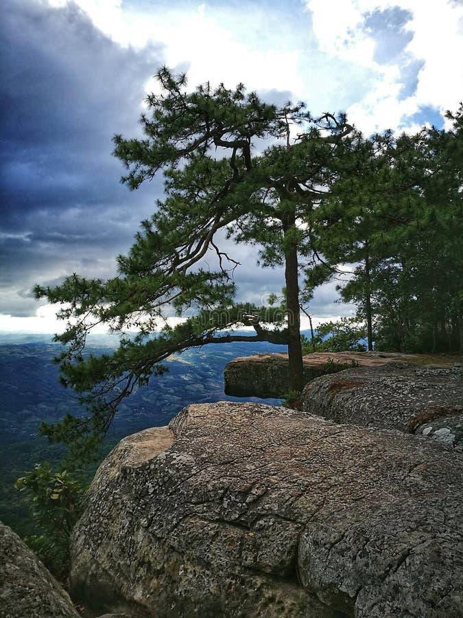 grand arbre sur la falaise et le ciel bleu photographie stock libre de droits