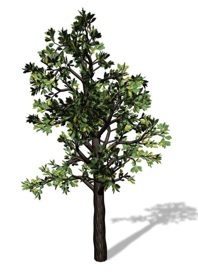 Grand arbre sur le fond blanc illustration de vecteur