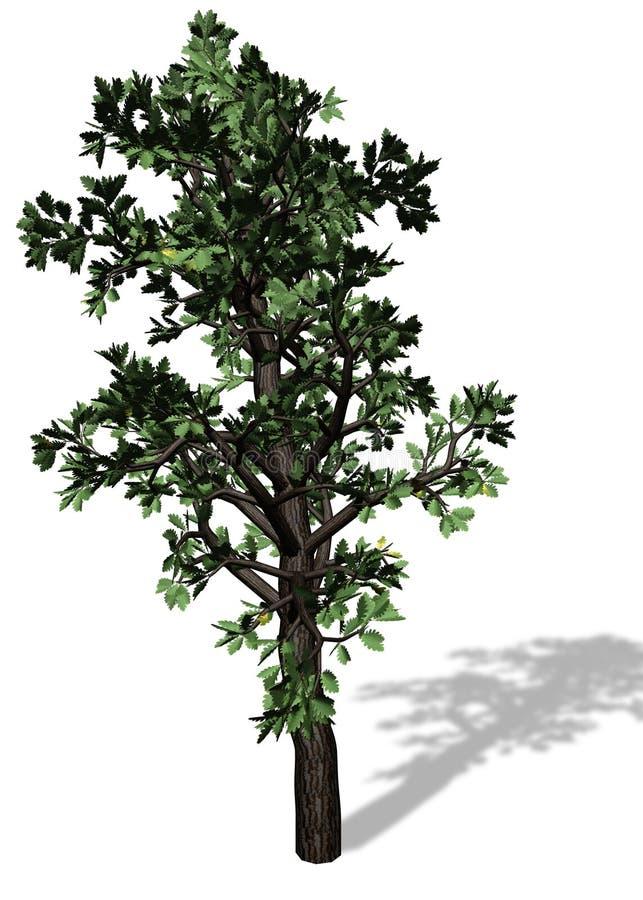 Grand arbre sur le fond blanc illustration libre de droits