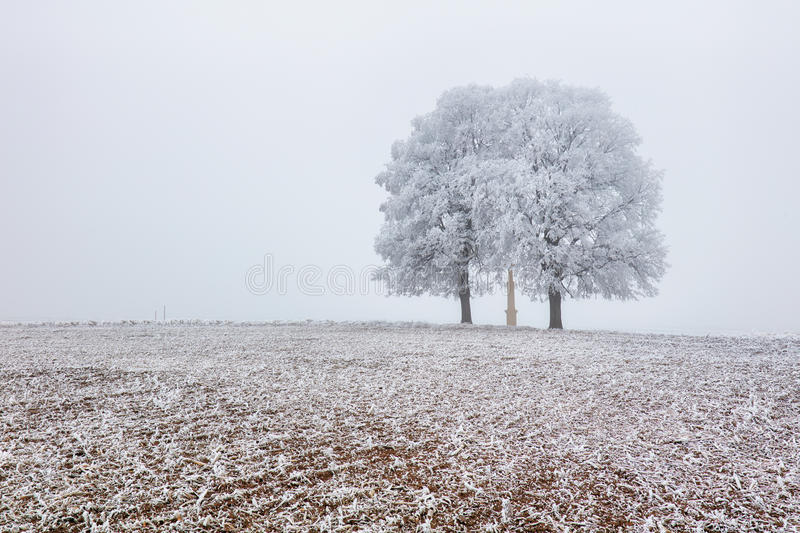Grand arbre sur le pré Paradis bleu Lif terrestre de ciel de vue de voyage images stock