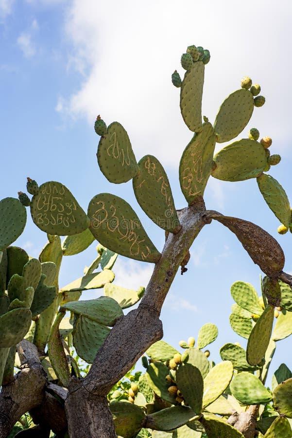 Grand cactus vert sur le fond de ciel bleu Cactus avec le texte là-dessus photographie stock