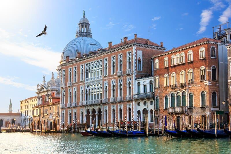 Grand Canal von Venedig in Italien, Ansicht über Santa Maria della Salute-Basilika und Gondeln stockfoto