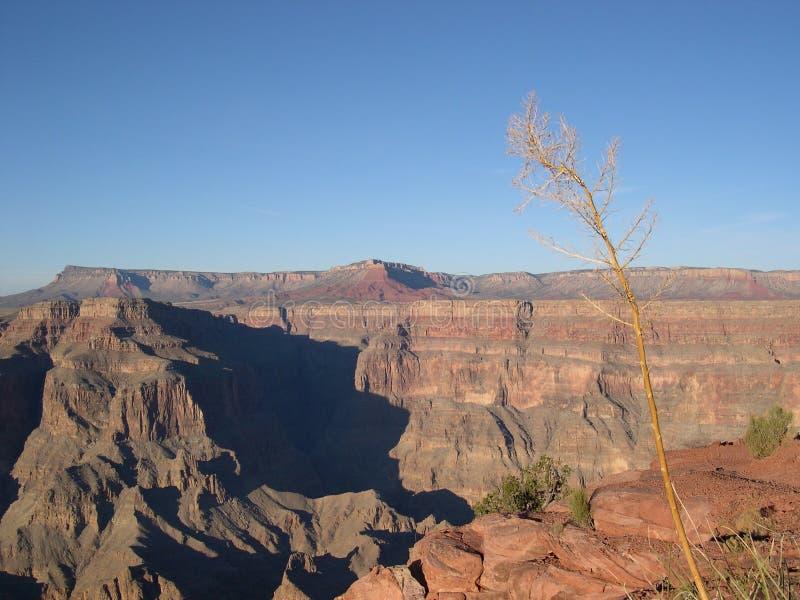 Grand Canyon royaltyfri fotografi