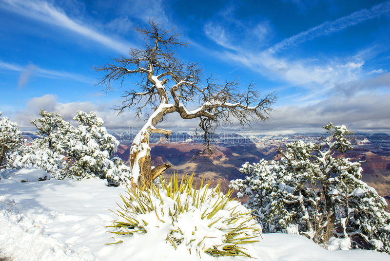 Grand Canyon. The Grand canyon national park in snow royalty free stock photo