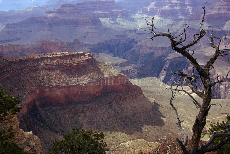 Grand Canyon. A view of Grand Canyon with old tree royalty free stock images