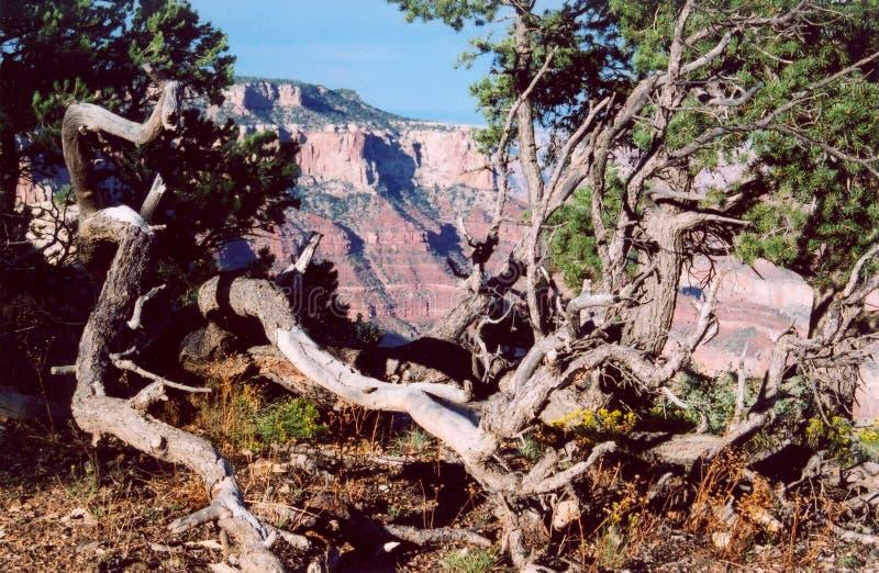 Grand Canyon_7 Stock Image