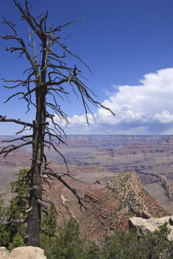 Grand Canyon Arizona. USA stock photo