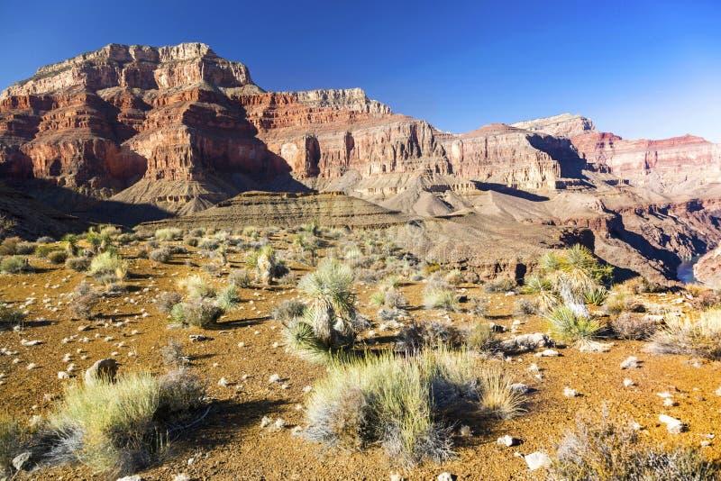 Grand Canyon da paisagem do Arizona e o Rio Colorado distante na fuga de caminhada de Tonto foto de stock