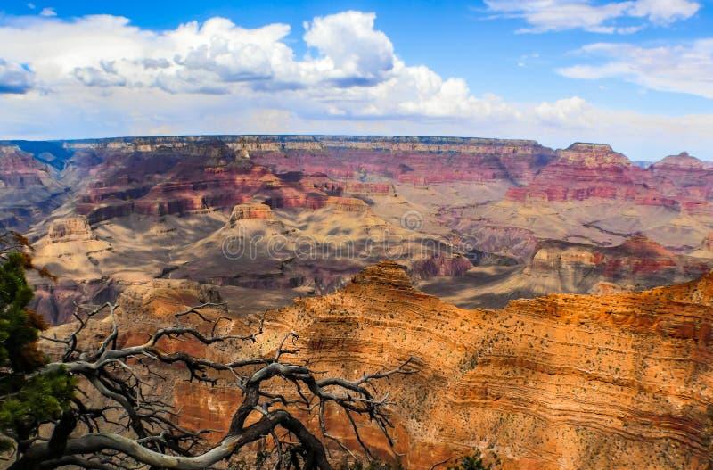 Grand Canyon grand de la jante du sud encadrée un arbre de cèdre, mais en montrant l'immensité du canyon avec ses montants éligib photographie stock