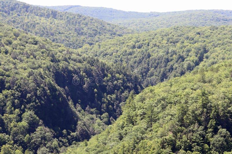 Grand Canyon de la Pennsylvanie photographie stock libre de droits