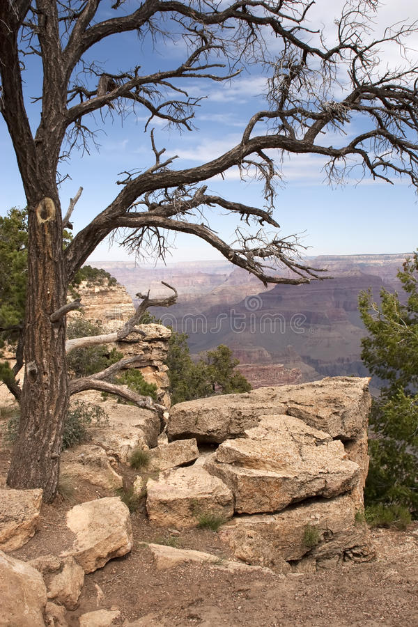 Download Grand Canyon Dead Tree stock image. Image of arizona, camping - 9763181