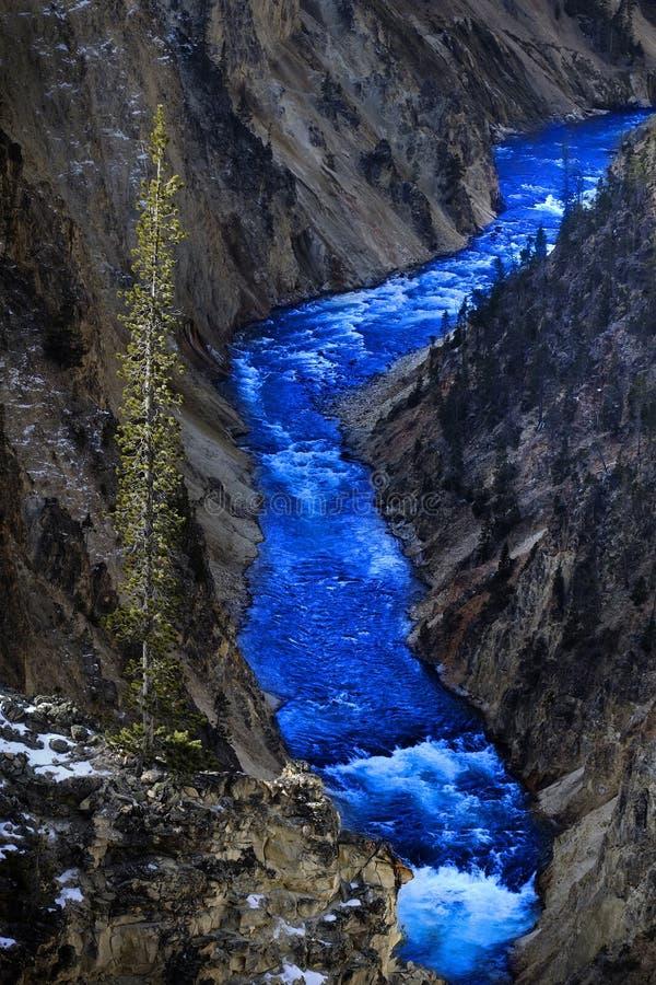 Grand Canyon del pino del fiume di eYellowstone del Th immagine stock