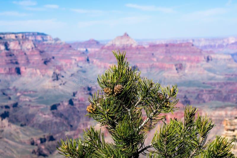 Grand Canyon, die Vereinigten Staaten von Amerika lizenzfreie stockfotos