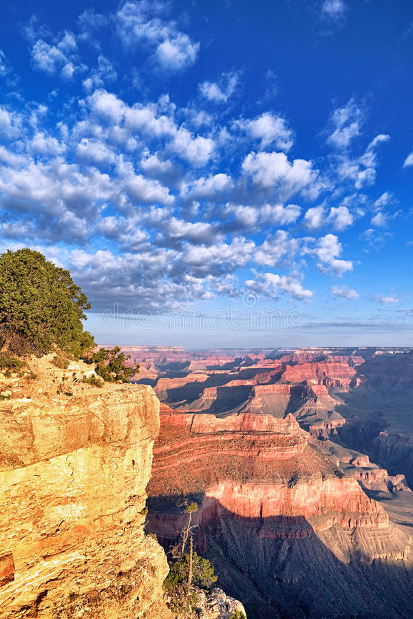 Grand Canyon in the morning royalty free stock image