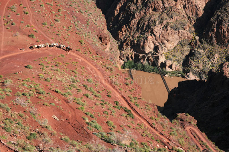 Grand Canyon mule train royalty free stock image