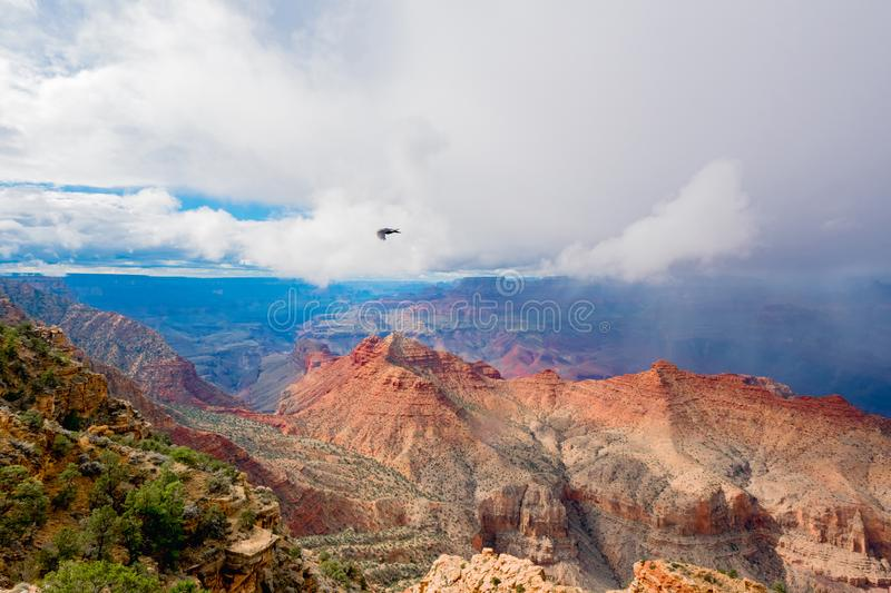 Grand Canyon national park with a flying eagle stock photography