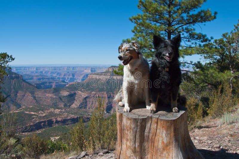 Grand Canyon North Rim stock images