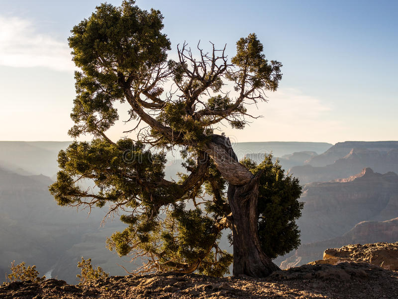 Grand Canyon Rim Sunset del sud fotografia stock libera da diritti