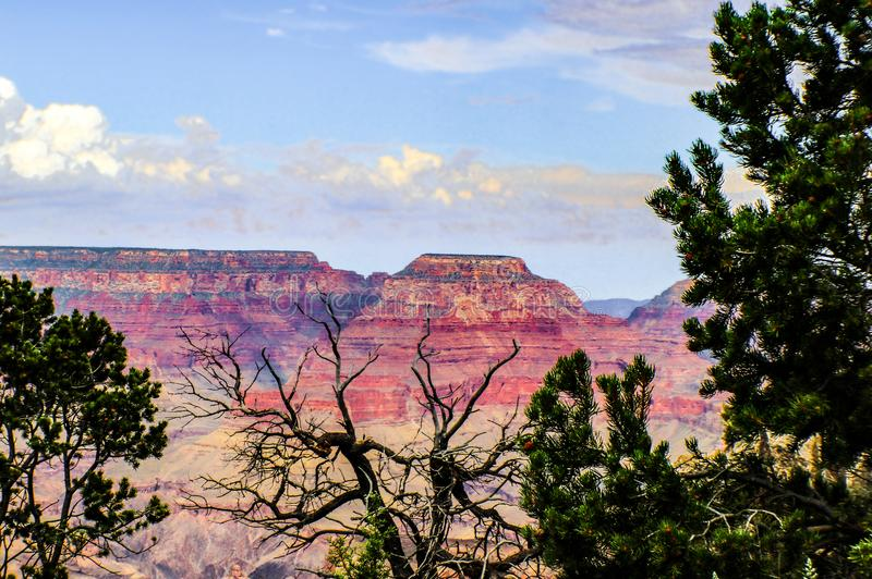 The Grand Canyon from the South rim- mesas under early evening sky framed by pine trees.  stock photo