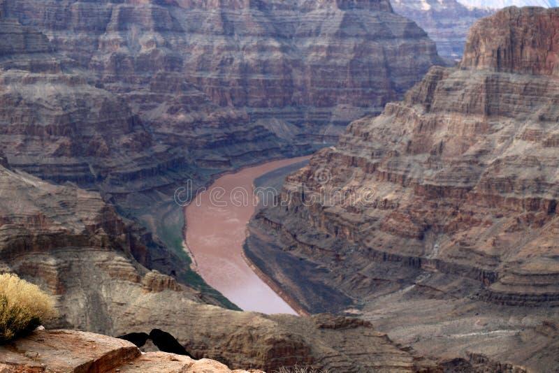 Grand Canyon, tallado por el río Colorado en Arizona, Estados Unidos imagen de archivo