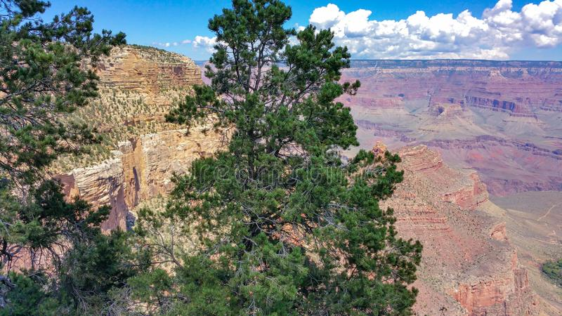 Grand Canyon with tree in foreground stock image