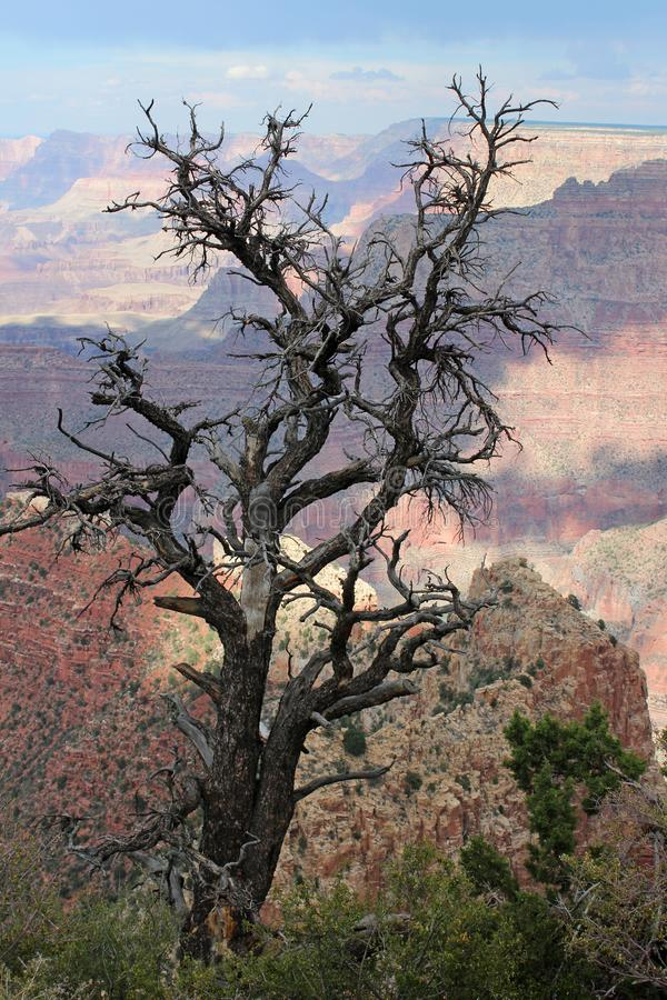 Grand Canyon -Uitzicht, Arizona royalty-vrije stock foto