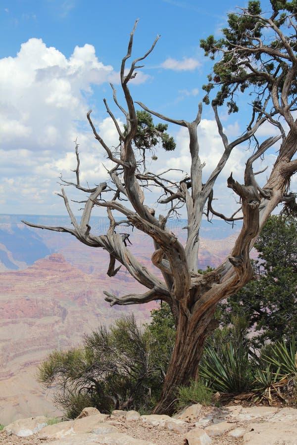 Grand Canyon -Uitzicht, Arizona royalty-vrije stock afbeelding