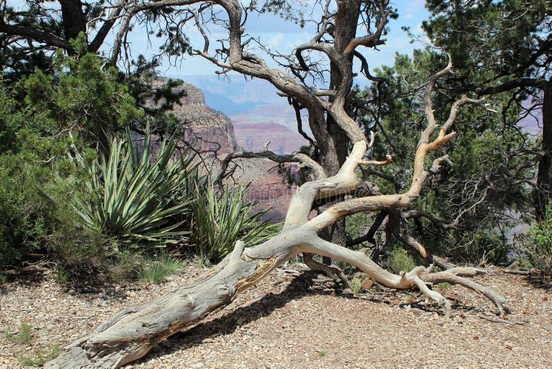 Grand Canyon -Uitzicht, Arizona stock fotografie
