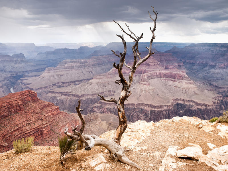 Grand Canyon, USA stockfoto