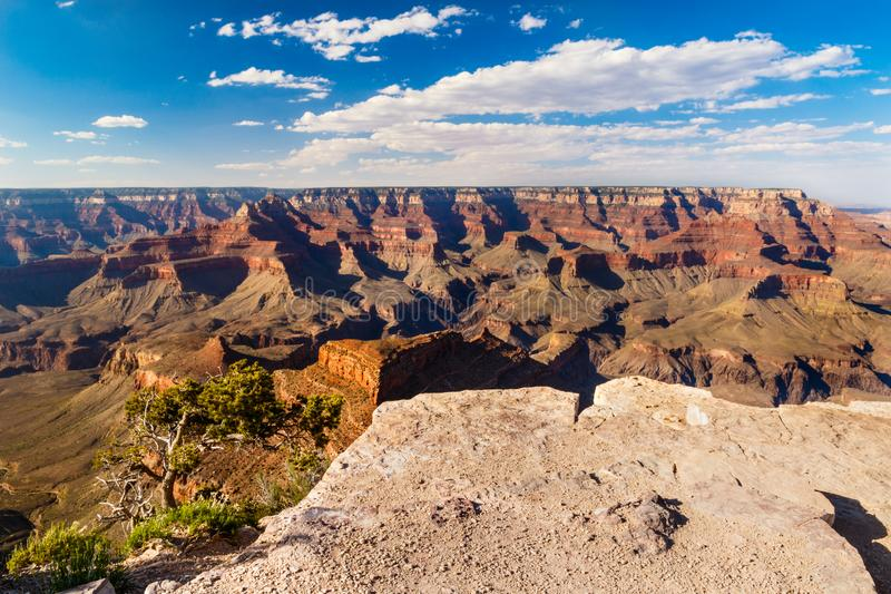 Grand Canyon, view from Maricopa Point on South Rim. Grand Canyon, seen from South Rim`s Maricopa Point. The stony overlook and tree is in the foreground stock images