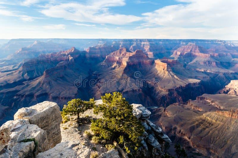 Grand Canyon von der Südkante bei Sonnenuntergang Felsig übersehen Sie mit Baum im Vordergrund; Nordkante mit Schatten stockfoto