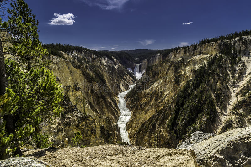 Grand Canyon of Yellowstone. Lower Falls of the Grand Canyon of Yellowstone, Yellowstone National Park, Wyoming royalty free stock images