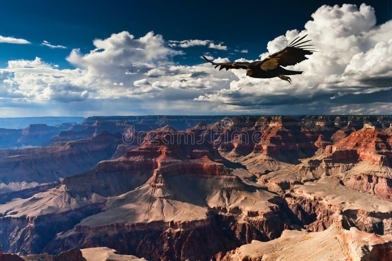 Grand- CanyonNationalpark stockbilder
