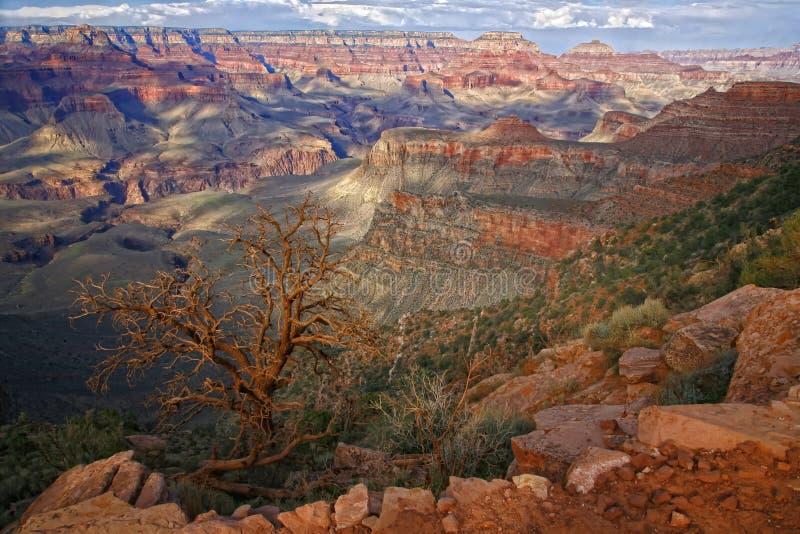 Grand- CanyonNationalpark, Arizona USA stockbilder