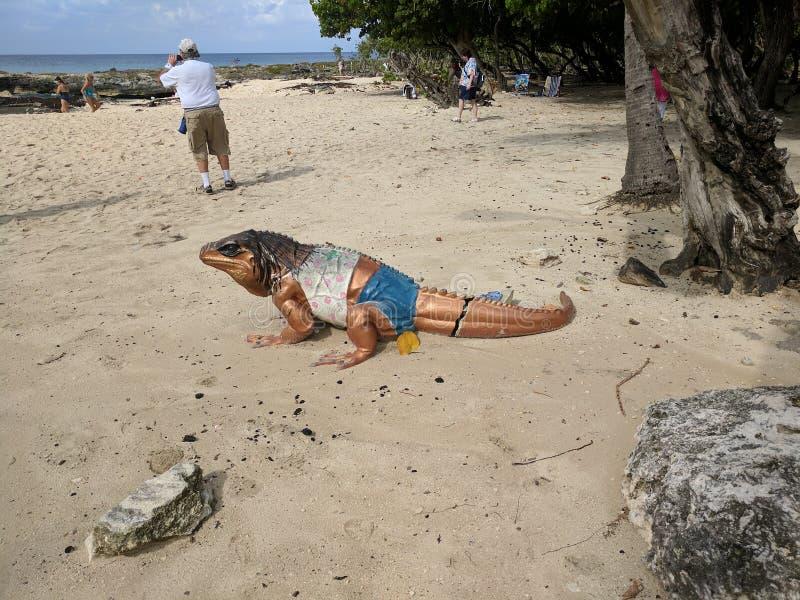 Grand Cayman metallisk kopparmålad ödlakonst arkivfoton