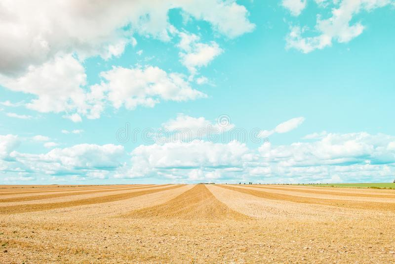 Grand champ jaune après moisson Champs de blé fauchés sous le ciel bleu et les nuages au jour ensoleillé d'été Lignes convergente images libres de droits