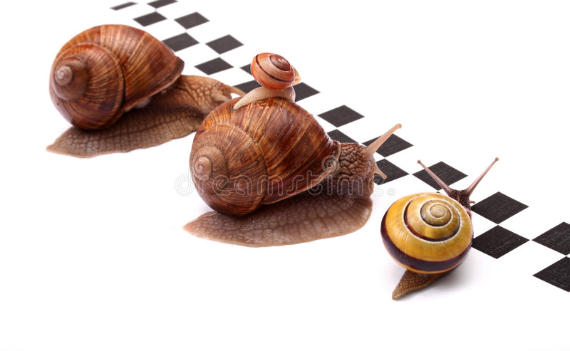 Download Grand chemin image stock. Image du fond, chasse, drôle - 731133