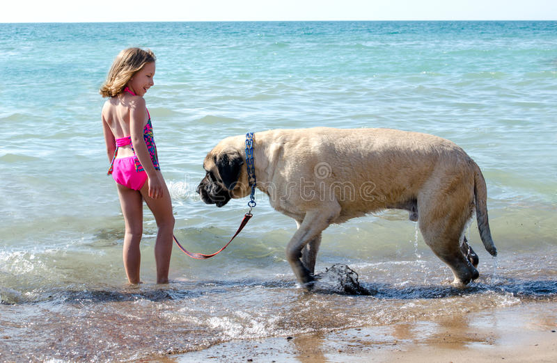 Grand chien de mastiff et petite petite fille images libres de droits