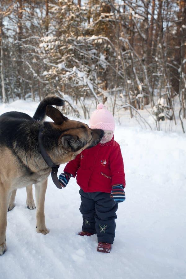 Grand chien de Multibred léchant la petite fille photographie stock