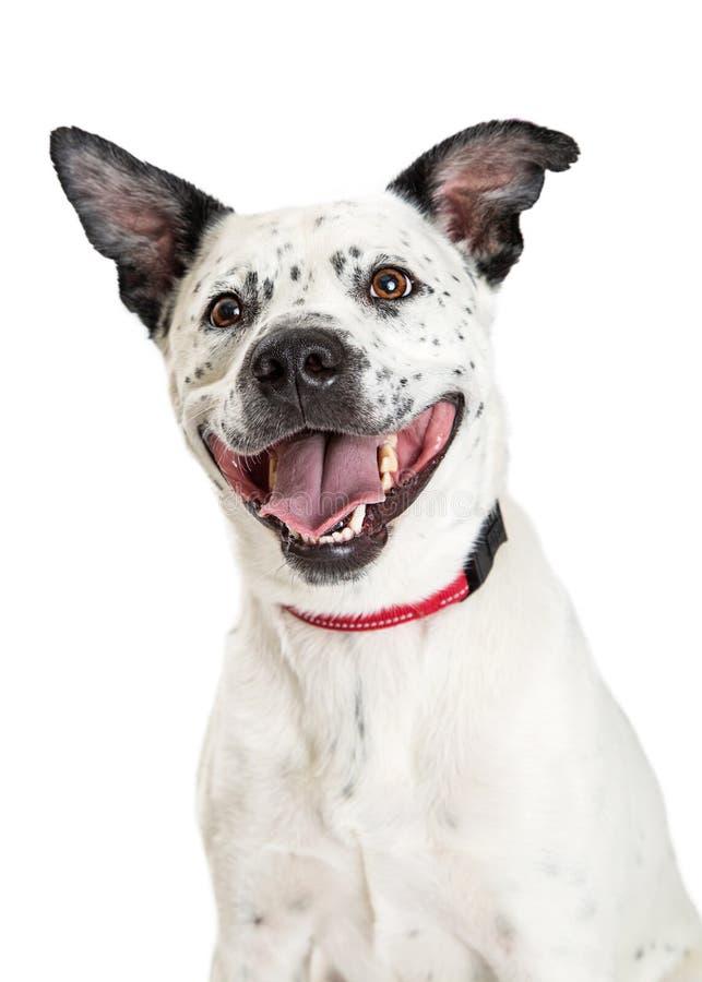 Grand chien heureux de sourire recherchant images libres de droits