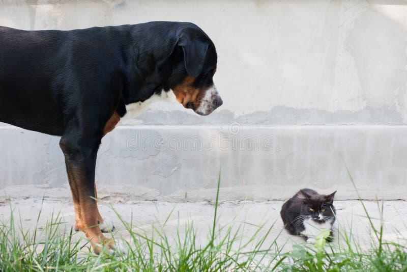 Grand chien qui regarde le chat images stock