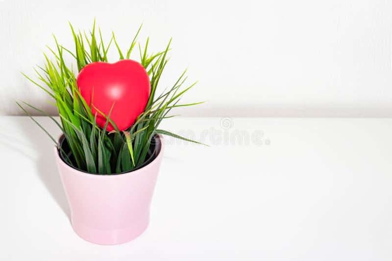 Grand coeur rouge se trouvant sur une usine dans le pot de fleur, l'espace de copie photos stock