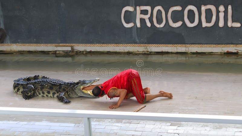 Grand crocodile d'Éditorial-exposition sur le plancher dans le zoo images libres de droits