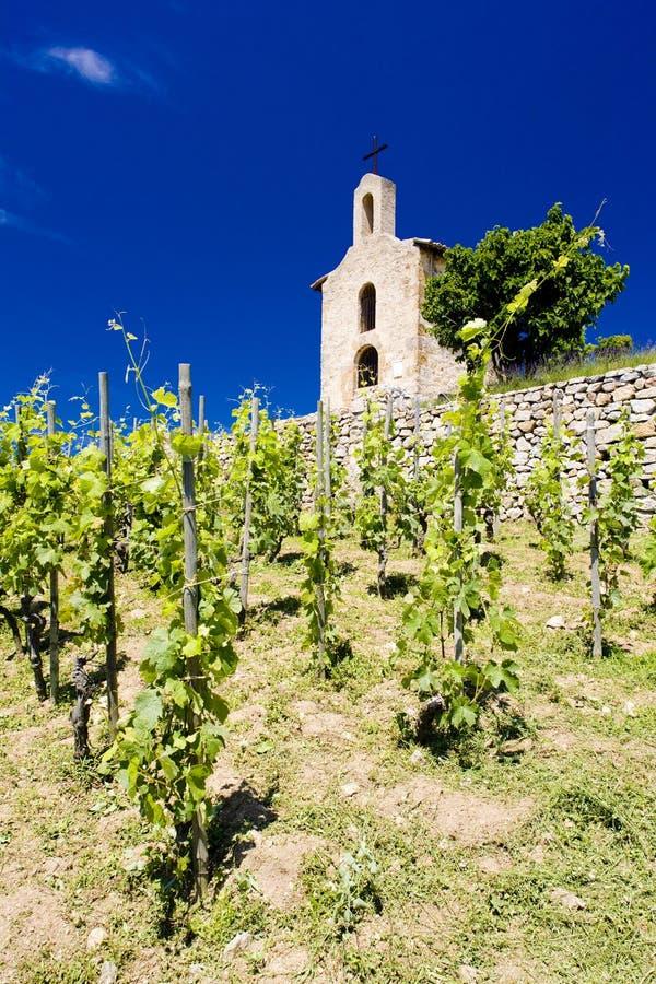 Download Grand cru vineyards stock image. Image of agriculture - 15257777