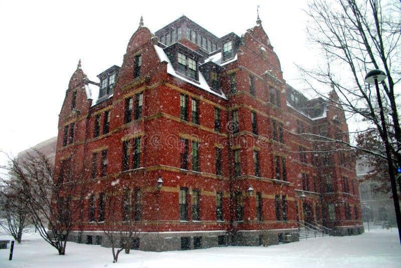 Grand dos de Harvard, Etats-Unis images libres de droits