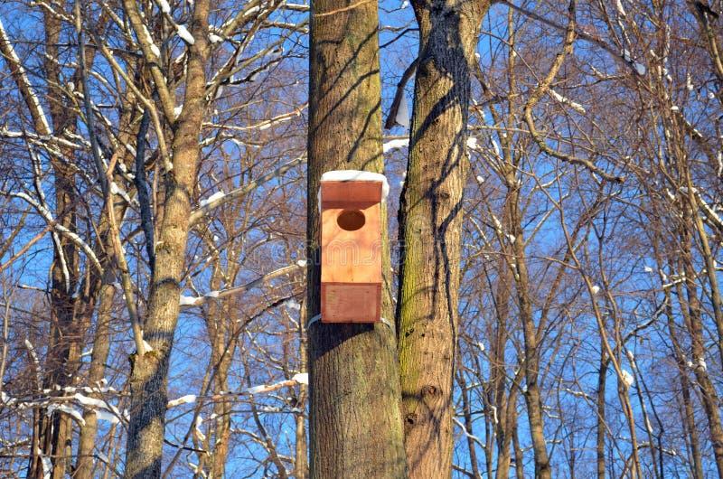Grand emboîtement-cadre en bois s'arrêtant sur le ciel bleu d'arbre photo stock