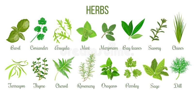 Grand ensemble d'herbes culinaires réalistes sauge, thym, romarin, basilic illustration libre de droits