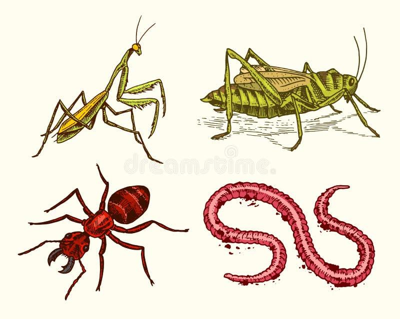Grand ensemble d'insectes Animaux familiers de vintage dans la maison Fourmi de ver de sauterelles de mante dans le style ancien  illustration libre de droits